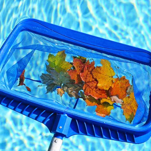 cleaning leaves from pool
